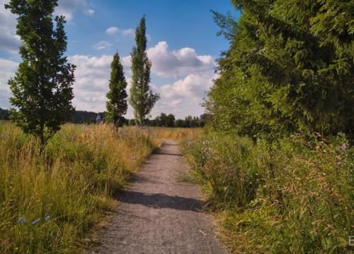 Schmaler Weg