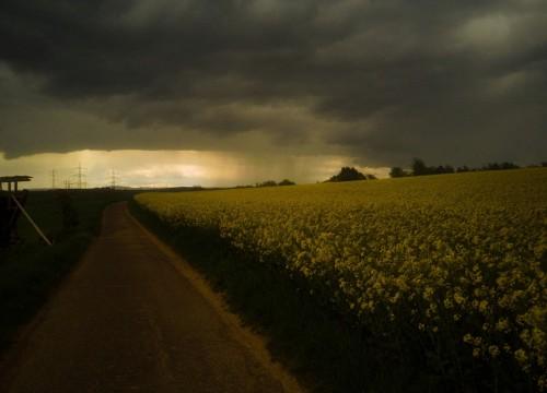 Rapsfeld im Unwetter